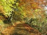 Travel Advisory – Narrow RoadAhead